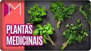 Plantas que Você tem em Casa e também são Remédios