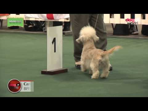 National Terrier 2017 - Best Puppy in Show