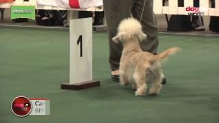 National Terrier 2017  Best Puppy in Show