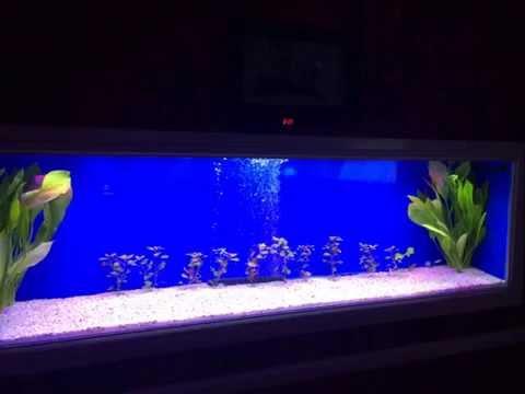 Discus Aquarium  Project Build
