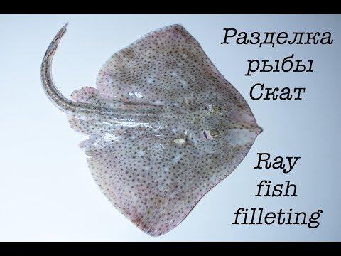 Разделка рыбы скат. Ray Fish Filleting