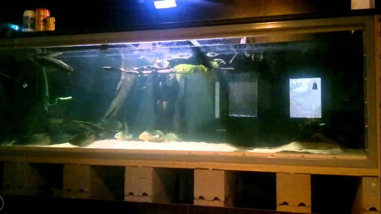 800g plywood tank 1 youtube for Plywood fish tank