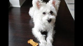 Homemade Dog Biscuits - Sweet Potato Peanut Butter
