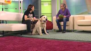 Выбираем собаку: лабрадор