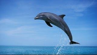Las 10 Cosas Que NO Sabías Acerca De Los Delfines