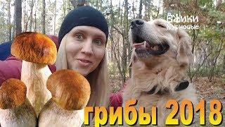 Как собака помогала собирать грибы ☀️ Съедобные грибы ☀️ ложные опята