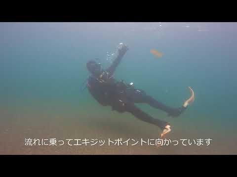 川でドリフトダイビング!   伊豆から遠征!ダイビングツアー