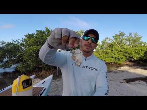 red crab hook up bait