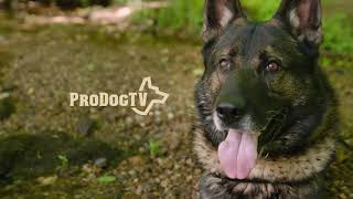 ProDogTV - Season One Trailer
