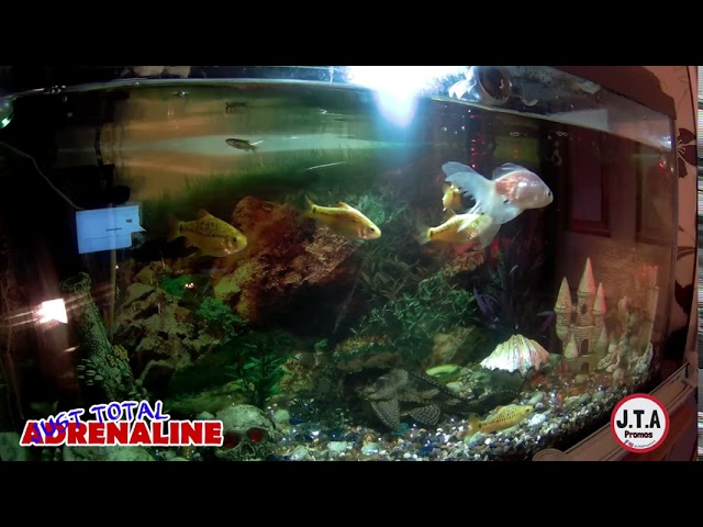 Fish Swimming - 4K Quality Video of fish swimming in our tropical tank @JTAPromos - JTAPromos.net 2