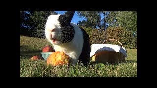 A Rabbit Music Video: Moving to the Country, Gonna Eat a lot of Peaches