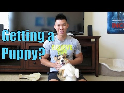 PREPARING FOR A PUPPY? MY TIPS - Life After College: Ep. 368
