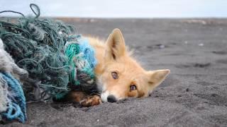 Мусор опасен для животных!!!