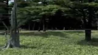 奈良県、吉野熊野国立公園内、大台ヶ原にて野生の子鹿撮影に成功!