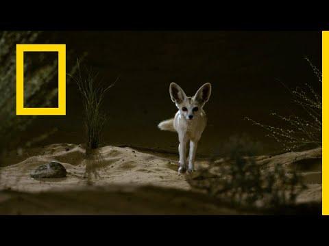 الموت قبل بزوغ الفجر: التلال لها عيون | ناشونال جيوغرافيك أبوظبي