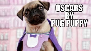 Oscars By Pug Puppy 2015 (best Picture Nominees)