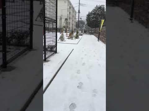 Snowfall in Tokyo 2015