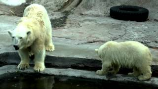 Moscow Zoo (Summer, 2012)