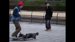 2006年、上野公園で見かけたウェルシュ・コーギー・カーディガンのスケ...