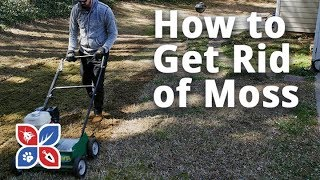 Do My Own Lawn Care - How to Get Rid of Moss