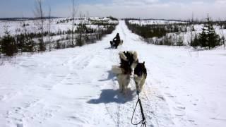 Descente en traineaux vers les grandes plaines - CANADALASKA Thumbnail