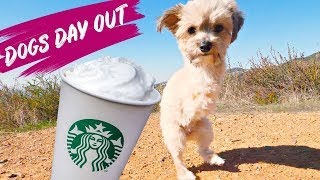 Two Legged Rescue Dog Gets Puppuccino and Dog Cookie Cake | Dogs Day Out