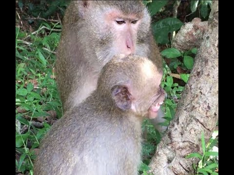 This bad monkey always grab and beat Amber when Amber got the foods