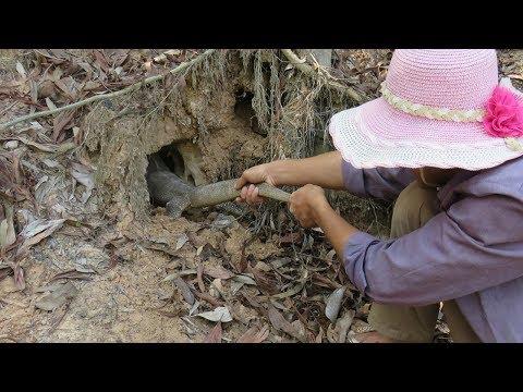 Real Komodo Dragon Hole - Brave Man Catch A Komodo Dragon In Hole By Hand