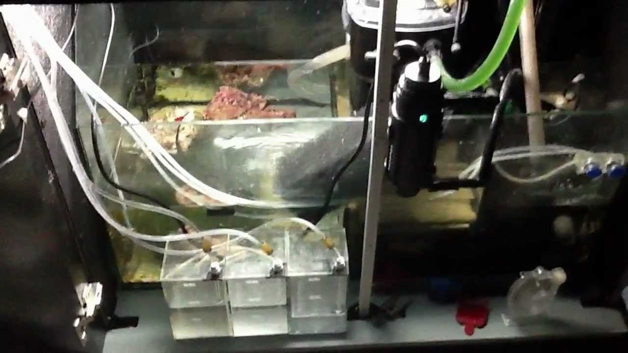 Rsm 650 Sump Refugium And Dosing Setup Youtube