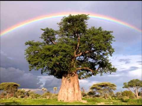 Los arboles mas grandes y raros del mundo the largest and for Arbol mas grande del mundo
