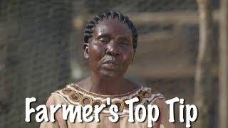 Shamba Shape Up Sn 06 - Ep 13 Ducks, Cassava, Sorghum (Swahili)