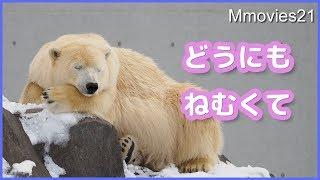 雪を食べながら充電中につきしばらくお待ち下さい Poalar Bear Life