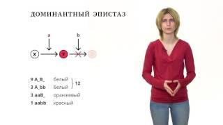 видео Реферат по биологии на тему