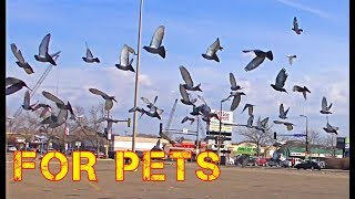 Cats Do *Backflips* for this Bird Video