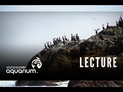 Introduction To Marine Life Course: Seabirds