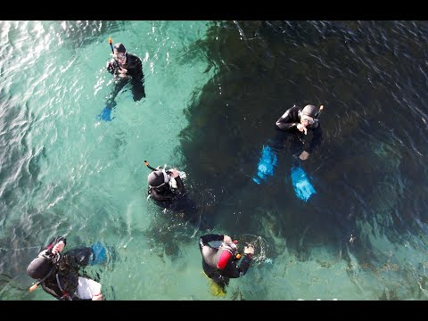 Play video: Students experience the marine environment on Maria Island
