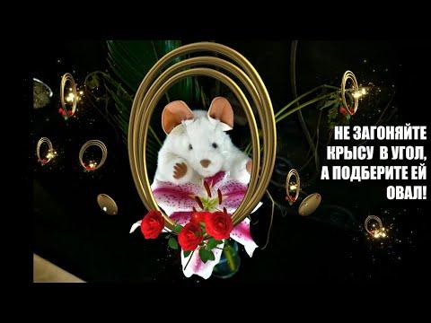 Самые прикольные стихи на год Крысы. Смешные поздравления и тосты с Новым Годом  – 2020