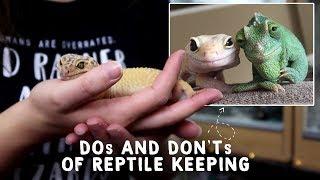 Funny reptile