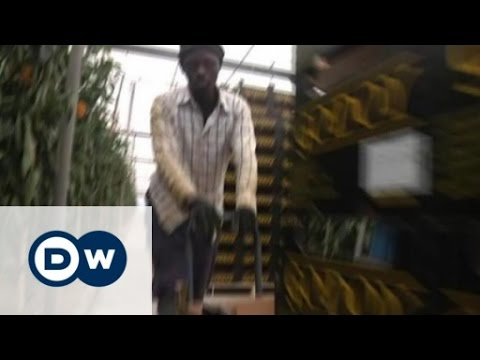 African immigrants exploited in Spain - cheap labor for cheap vegetables | DW Documentary