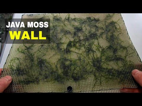 How To Make A Java Moss Wall