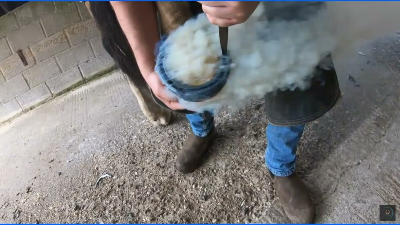 Hot Horse Shoeing - Difference Between A Horseshoe Trim & A Bare Foot Trim