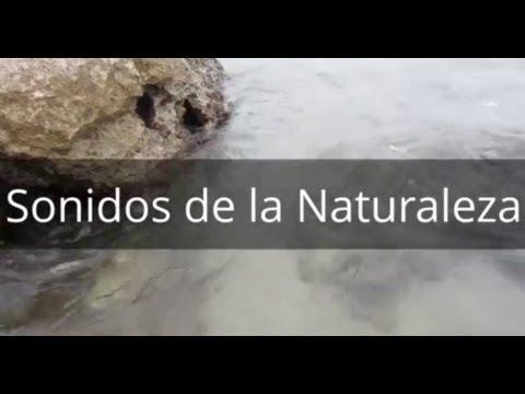 Sonidos de la naturaleza gratis para descargar - Olas del Mar