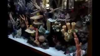 Fish By Design One Thousand Gallon Aquarium