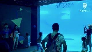 下関水族館「海響館」でイルカのデジタルアート