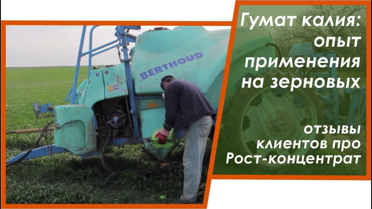Как посадить озимую пшеницу, технология выращивания