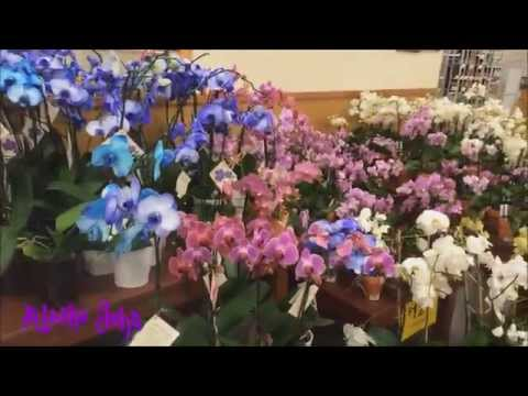 Orchid Plants For Sale - Anchorage Alaska