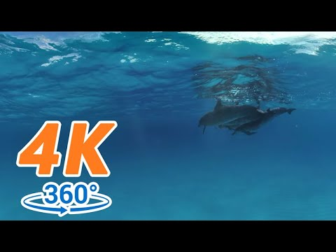 【4K 360 VR Demo】GoPro 4K 360 Demo: Swimming with Wild Dolphins in the Ocean