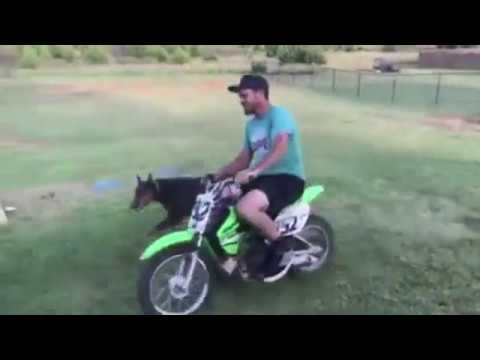 6 Doberman Pinschers Doing Cool Tricks - They Are Too Smart