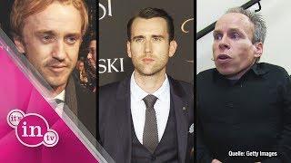 """Harry Potter""-Stars: So sieht ihr Patronus aus!"