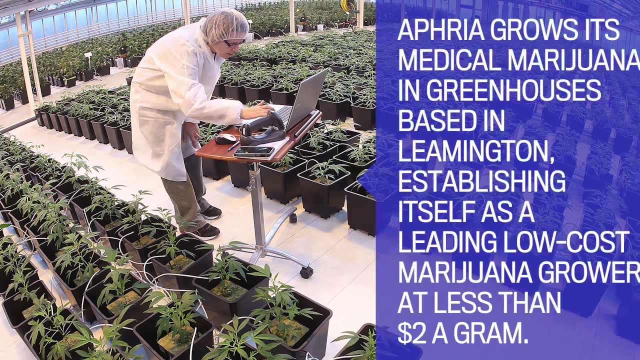 Aphria stock plummets after attack from short seller